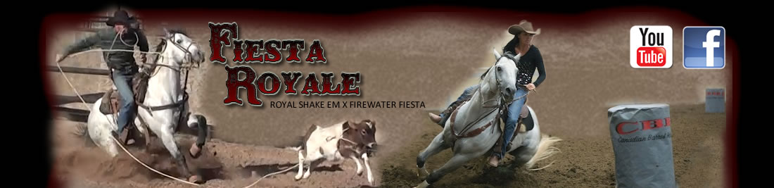 Fiesta Royale 2007 AQHA Gray Stallion | Breeding | Canada